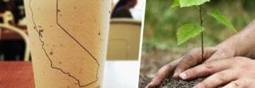 Deze biologisch afbreekbare bekers bevatten zaden en worden bomen als je ze weggooit!